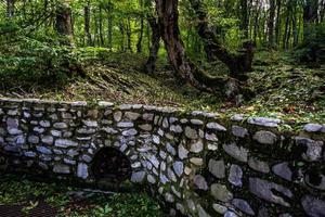 bosco campestre sul passo gombori foto
