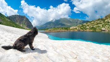 cane da pastore sulla neve vicino al lago di montagna foto