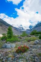 rododendri sotto montagne di ghiacciai nelle alpi foto