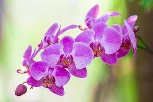 fiore di orchidee viola e rosa foto