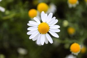 primo piano naturale bellissimo fiore foto