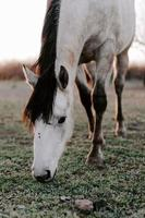 immagine verticale di un bellissimo cavallo bianco nel campo foto