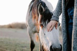 primo piano di un bellissimo cavallo bianco con una femmina nel campo foto