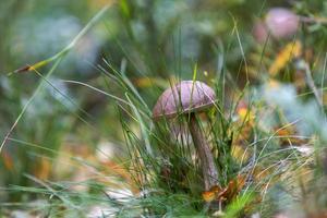 funghi di bosco nell'erba foto