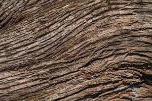 sfondo dalla corteccia di un vecchio albero foto