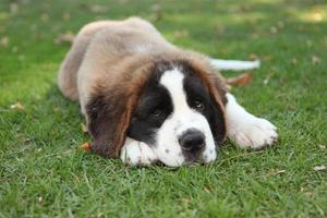cucciolo di cane all'aperto nell'erba foto