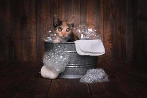 gattini nella tinozza che si fanno strigliare dal bagnoschiuma foto