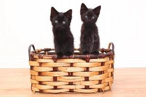 gattini curiosi all'interno di un cesto su bianco foto