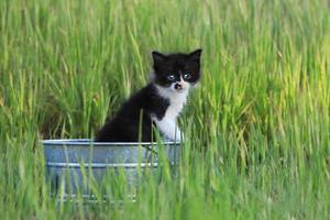 gattino all'aperto nell'erba alta verde in una giornata di sole foto