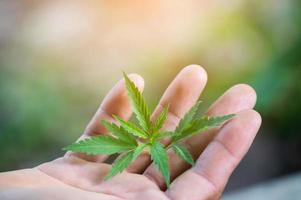 mano che tiene una foglia di marijuana foto
