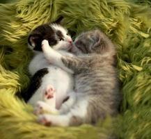 coccolare i gattini all'aperto alla luce naturale foto
