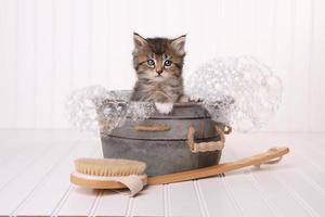 gattino maincoon con occhi grandi mentre fa il bagno nella vasca da bagno foto