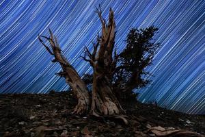 paesaggio di stelle dipinte di luce in pini bristlecone foto