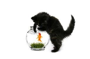 gattino nero che pesca foto