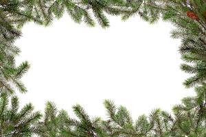 rami di albero di natale confinanti con lo spazio della copia foto