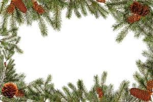 rami di alberi verdi e pigne su sfondo bianco foto