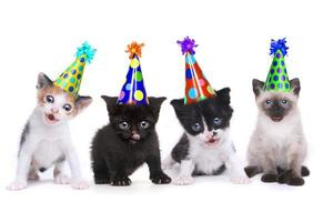 canzone di compleanno che canta gattini su sfondo bianco foto