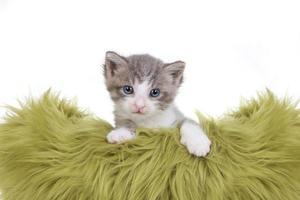 ritratto di gattino in studio su sfondo bianco foto