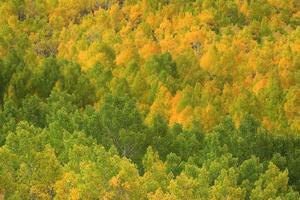 colori autunnali nelle montagne della sierra california foto