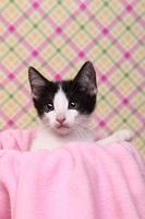 gattino curioso su uno sfondo rosa morbido foto