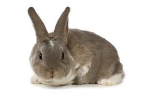 adorabile coniglietto su sfondo bianco foto