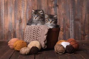 gattini con gomitoli di lana in studio foto