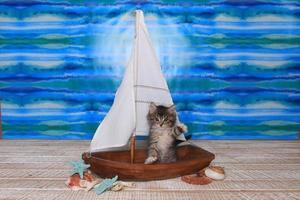 gattino maincoon con grandi occhi in barca a vela foto