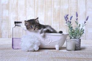 adorabile gattino in una vasca da bagno rilassante foto