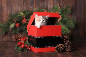 gattino per le vacanze di natale in una confezione regalo di babbo natale foto