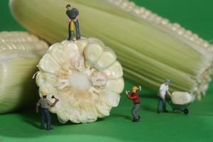 operai edili in miniatura in immagini alimentari concettuali con mais foto