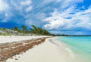 alghe rosse spiaggia di sargazo punta esmeralda playa del carmen messico foto