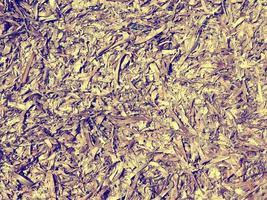 trama di alghe in giardino foto