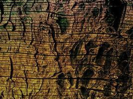 struttura in legno all'aperto foto