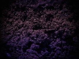 trama di terra scura in giardino foto