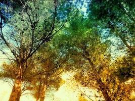 alberi di legno all'aperto foto