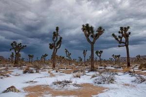paesaggio nel parco nazionale di Joshua Tree con alberi di yucca dopo una tempesta di neve foto
