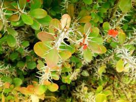 pianta da esterno in giardino foto
