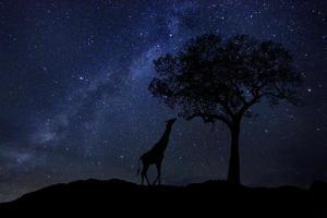 tracce stellari via lattea in sudafrica cielo notturno foto