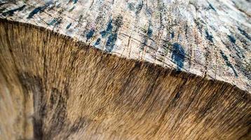 vicino alla vecchia struttura della superficie del moncone, struttura in legno foto