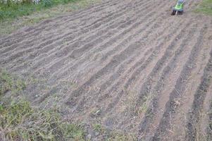 seminativo per piantare siderati in giardino foto