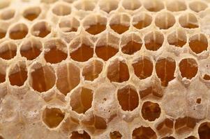macro nido d'ape miele natura foto