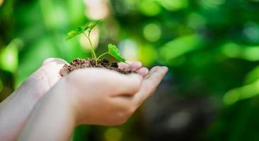 mano che tiene giovane albero per piantare. concetto salva il mondo foto