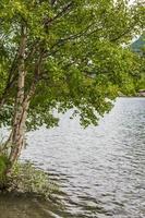 betulla natura solitaria dal lago vangsmjose vang norvegia. foto