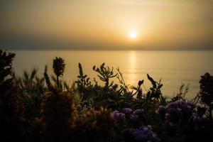sereno tramonto dorato sul mare con i fiori di campo foto