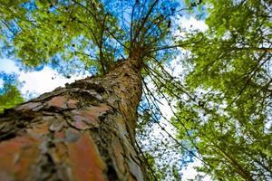 albero dal basso foto