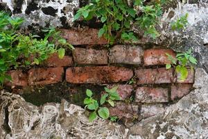 immagine di grunge vecchio muro di cemento stagionato di edificio e pianta crescono fuori dal muro foto