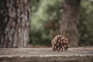 pigna marrone con resina su tavola di legno nella foresta foto