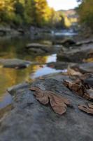 foglie morte di acero sulla pietra della riva del fiume con sfondo neutro foto