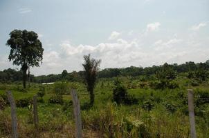 radura della foresta pluviale amazzonica, ecuador foto