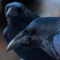 vista sulla valle attraverso l'occhio di un corvo